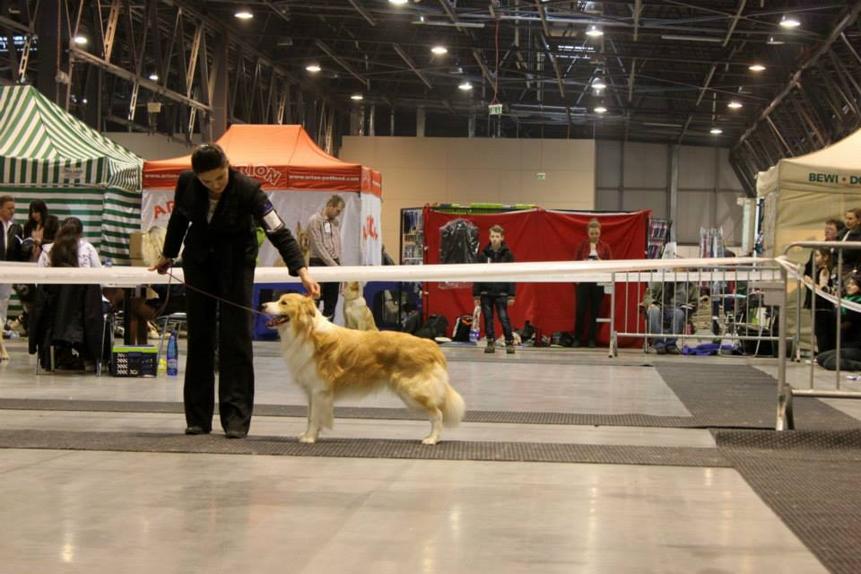 III Zimowa Wystawa Dog Show Będzin 19.01.2014r