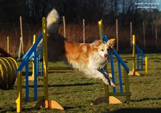 FIGO w agility
