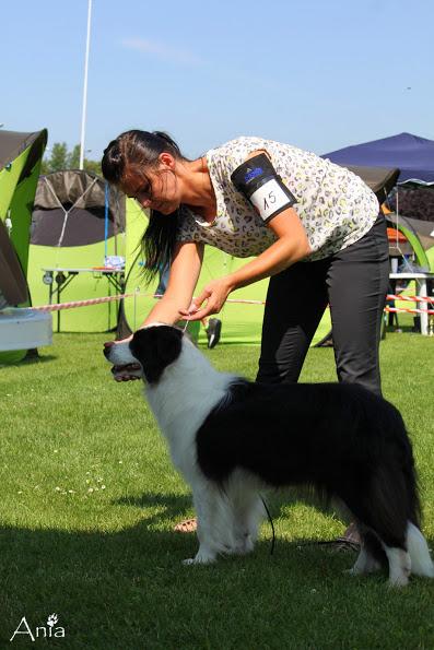 Dog Show Będzin 27.07.2014r