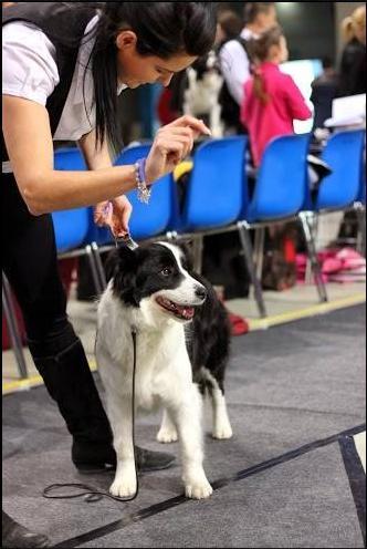 VII Międzynarodowa Wystawa Dog Show Rzeszów 16.02.2014r