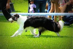 XXII International Dog Show Wrocław 27.09.2014